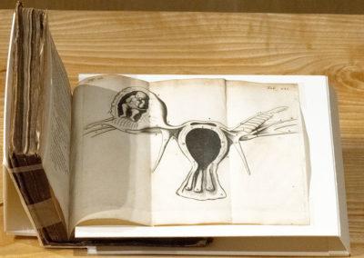 Regneri de Graaf medici delphensis partium genitalium defensio by Reinier de Graaf