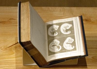 Natürliche schöpfungsgeschichte, gemeinverständliche wissenschaftliche vorträge by Ernst Haeckel