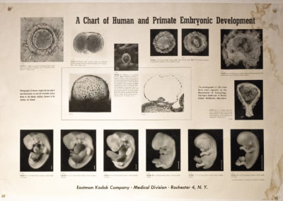 Medical School Anatomy Labs development chart