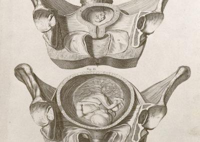 Tabulae anatomicae by William Smellie