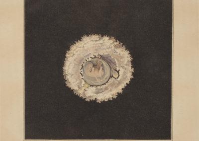 Die gebärmutter und das ei des menschen in den ersten schwangerschaftsmonaten by Burkhard Eilhelm Seiler
