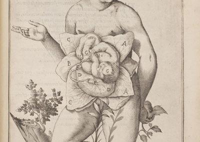De formato foetu liber singularis aeneis figuris exornatus by Adriaan van de Spiegel
